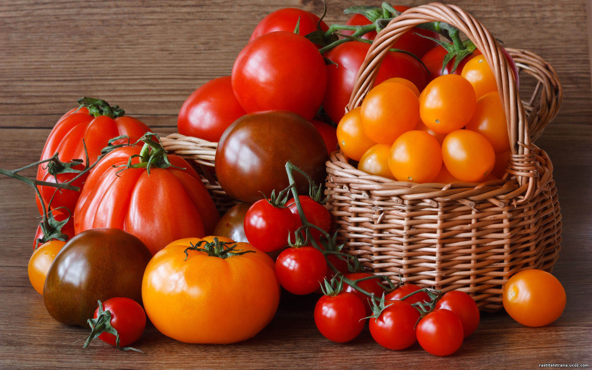 худшие сорта томатов для теплицы отзывы форум